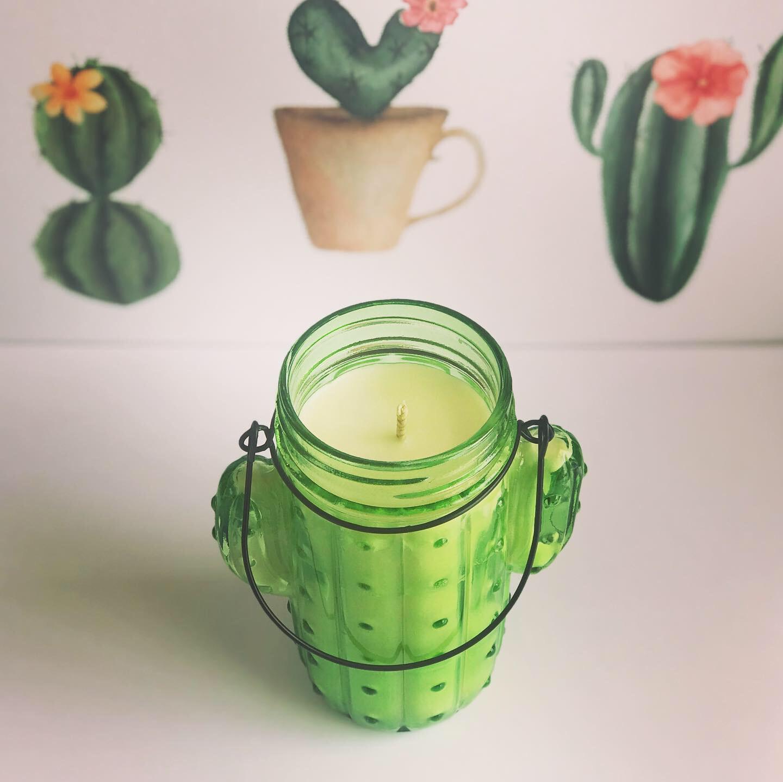 Cactus bougie de cire en pot